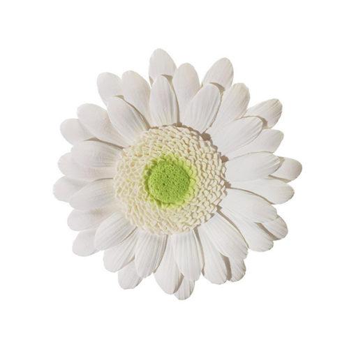 Zuckerblume Gerbera weiss 10cm