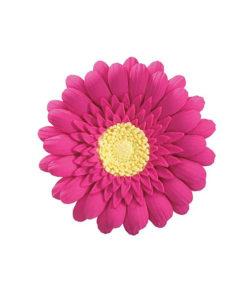 Zuckerblume Gerbera pink 76mm