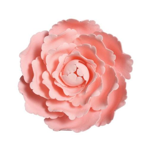 Zucker-Pfingstrose Rosa